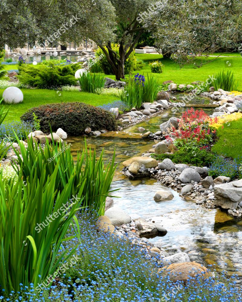 Green back yard